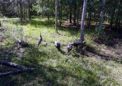 Swiss American Club EcoTour, Babcock Ranch, Punta Gorda FL
